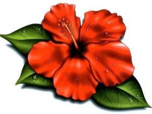 hawaiian-flower-clip-art-hawaiian-flowers-clip-art1